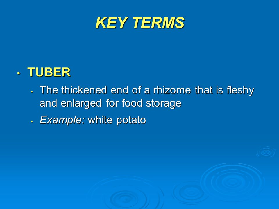 KEY TERMS TUBER. The thickened end of a rhizome that is fleshy and enlarged for food storage.