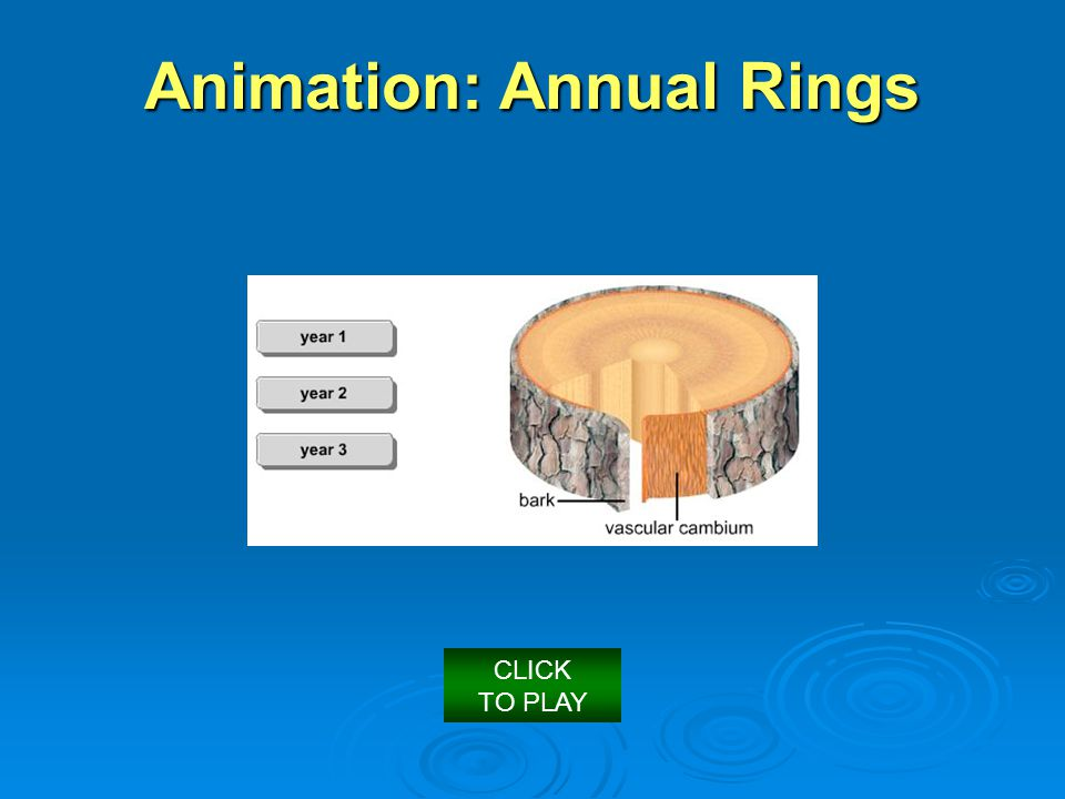 Animation: Annual Rings