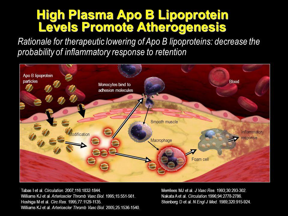 High Plasma Apo B Lipoprotein Levels Promote Atherogenesis
