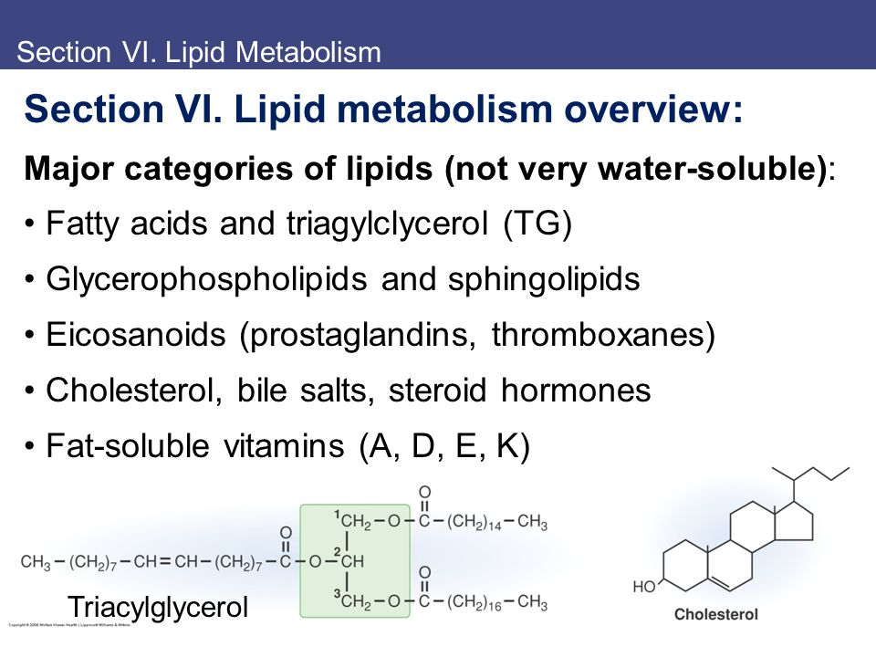 Section VI. Lipid Metabolism