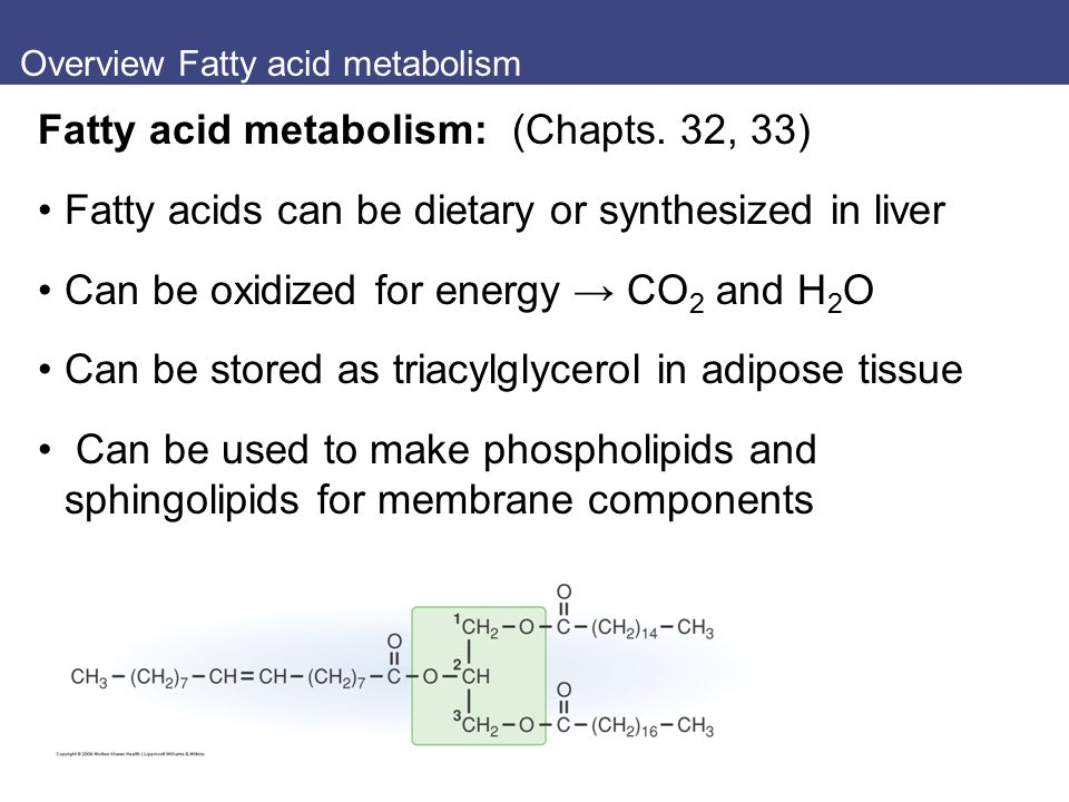 Overview Fatty acid metabolism