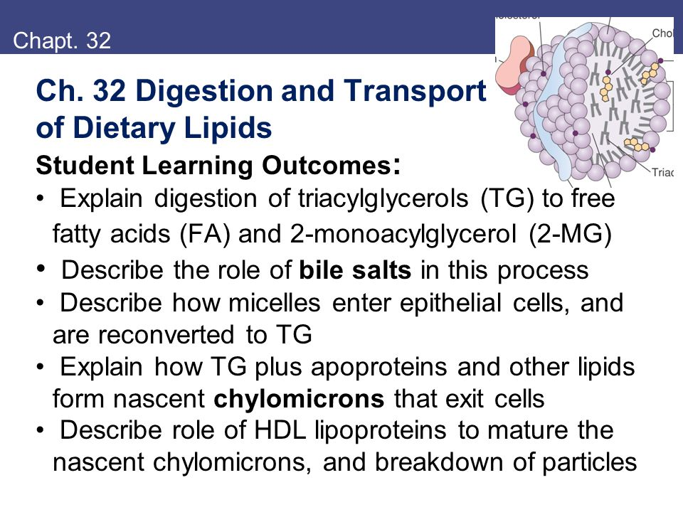 Ch. 32 Digestion and Transport of Dietary Lipids