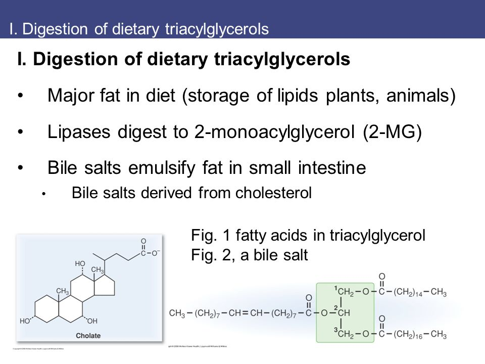 I. Digestion of dietary triacylglycerols