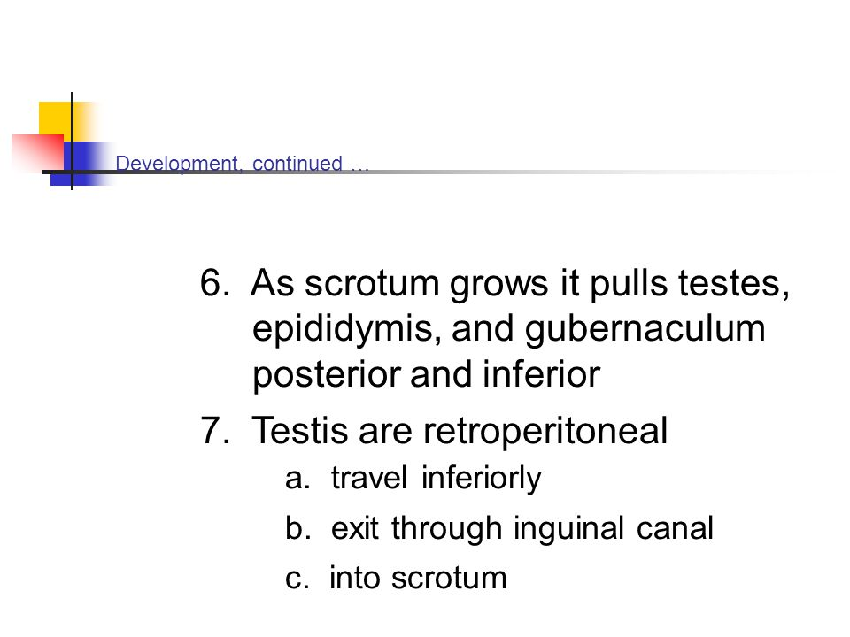7. Testis are retroperitoneal a. travel inferiorly