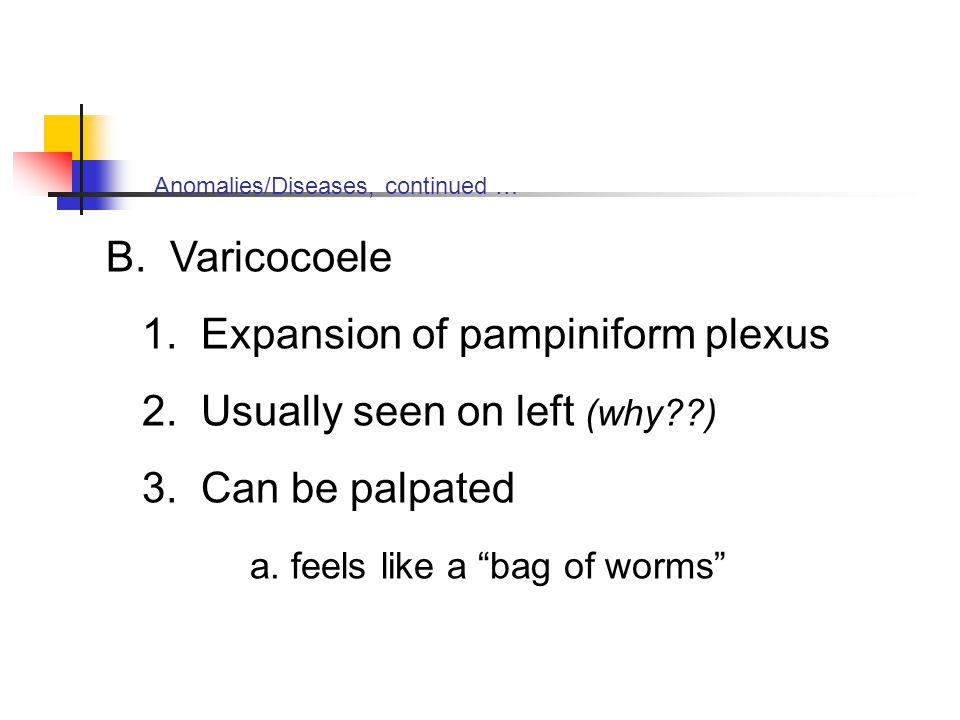 1. Expansion of pampiniform plexus 2. Usually seen on left (why )
