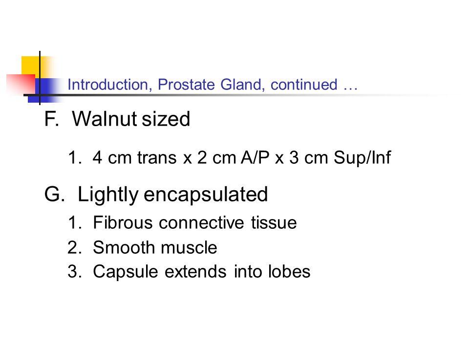 1. 4 cm trans x 2 cm A/P x 3 cm Sup/Inf G. Lightly encapsulated