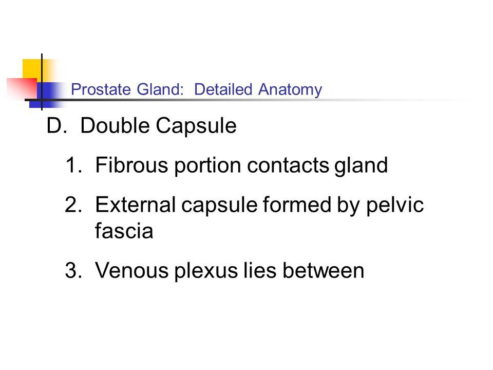 1. Fibrous portion contacts gland