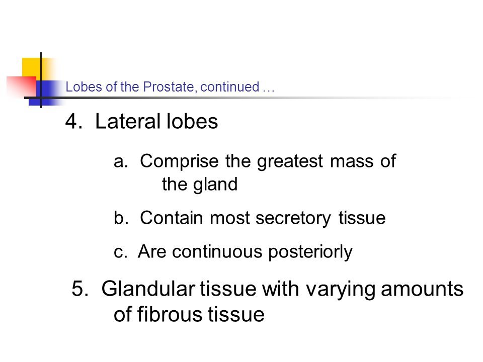 a. Comprise the greatest mass of the gland