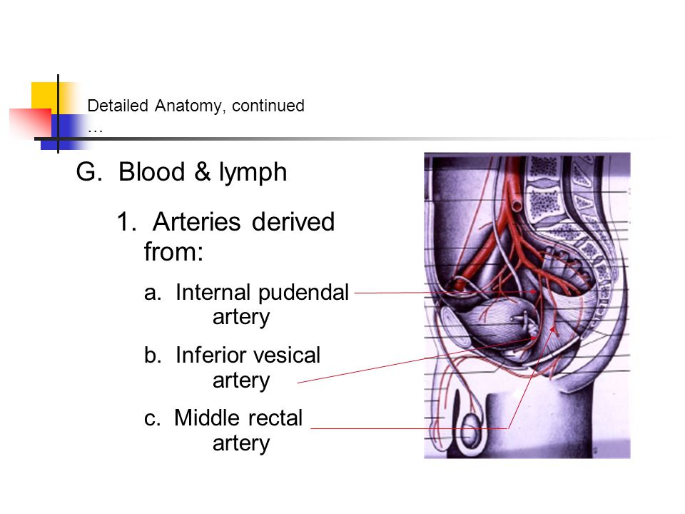 Detailed Anatomy, continued …