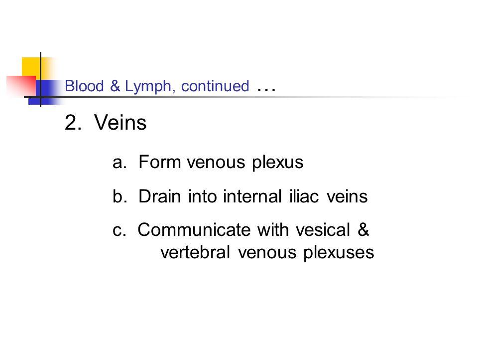 Blood & Lymph, continued … 2. Veins a. Form venous plexus