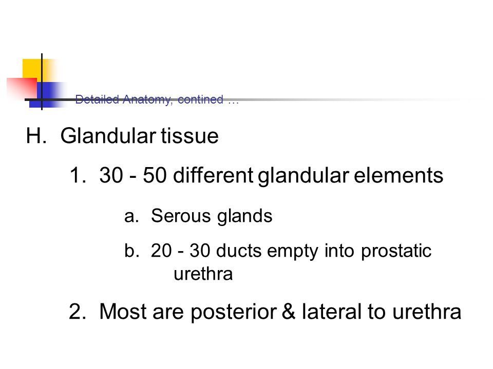1. 30 - 50 different glandular elements a. Serous glands