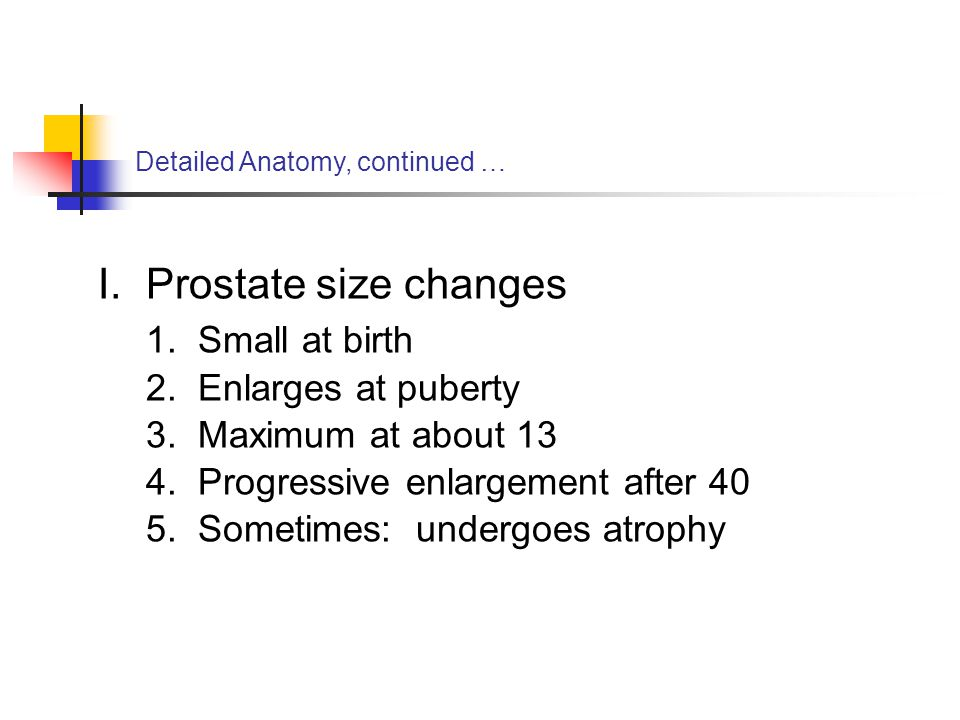 Prostate size changes 1. Small at birth 2. Enlarges at puberty