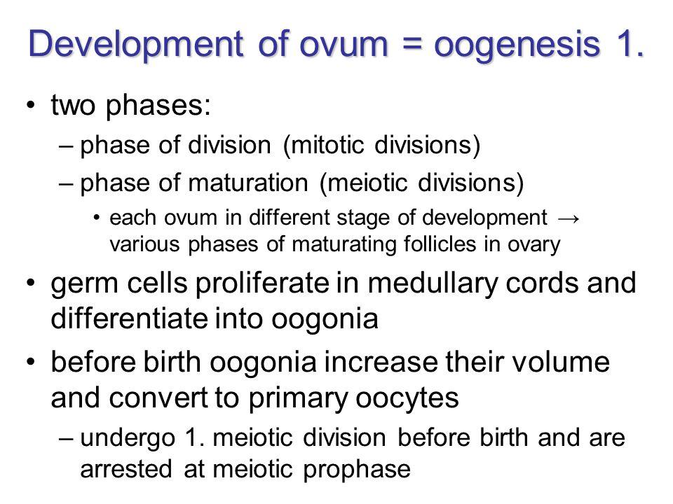 Development of ovum = oogenesis 1.