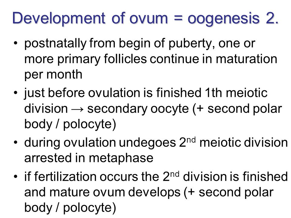 Development of ovum = oogenesis 2.