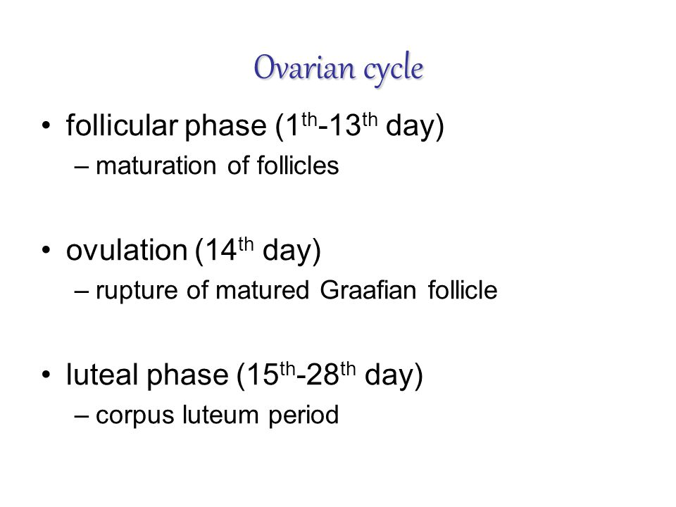 Ovarian cycle follicular phase (1th-13th day) ovulation (14th day)