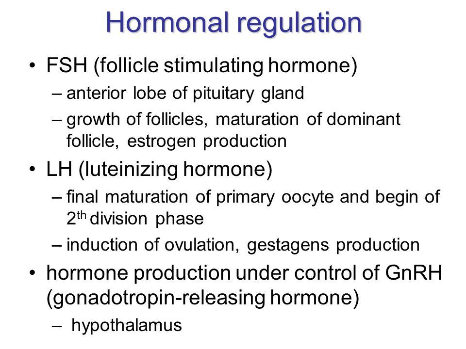 Hormonal regulation FSH (follicle stimulating hormone)