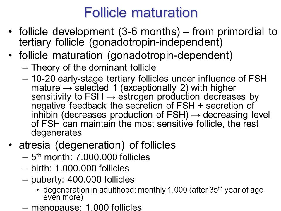 Follicle maturation follicle development (3-6 months) – from primordial to tertiary follicle (gonadotropin-independent)