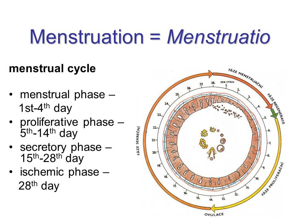 Menstruation = Menstruatio