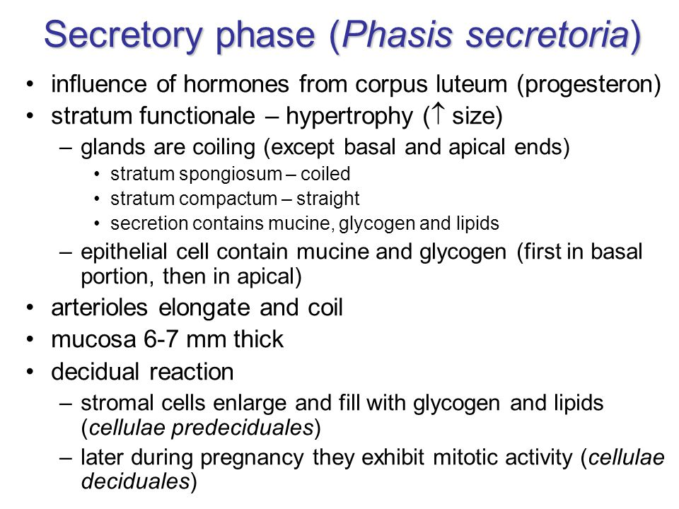 Secretory phase (Phasis secretoria)