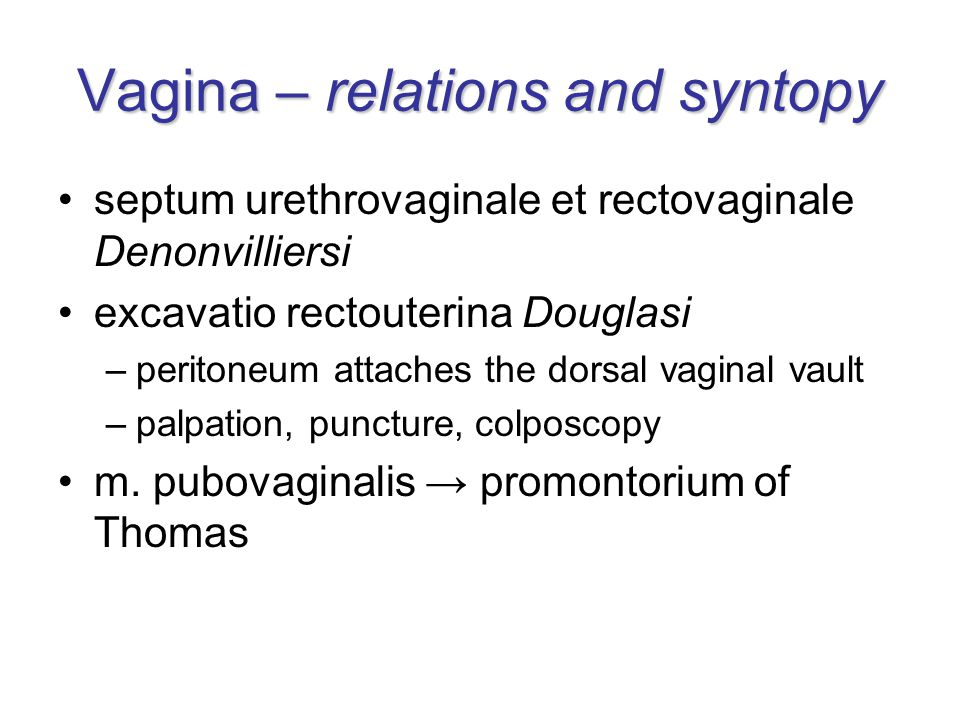 Vagina – relations and syntopy