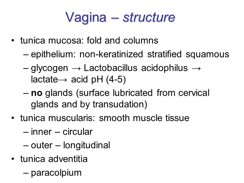 Vagina – structure tunica mucosa: fold and columns