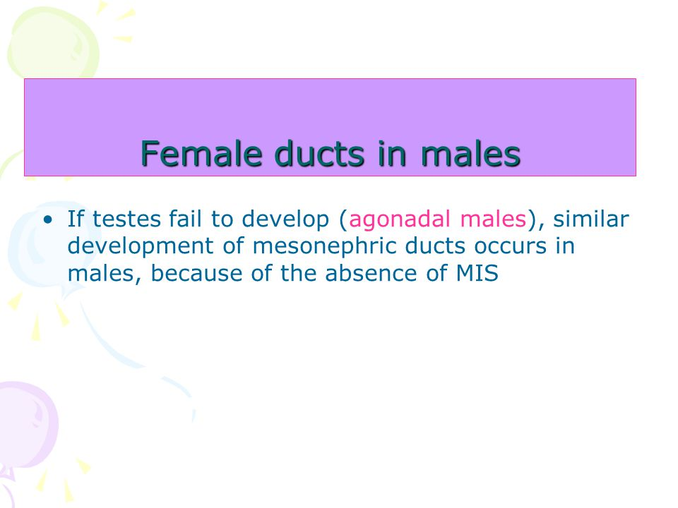 Female ducts in males