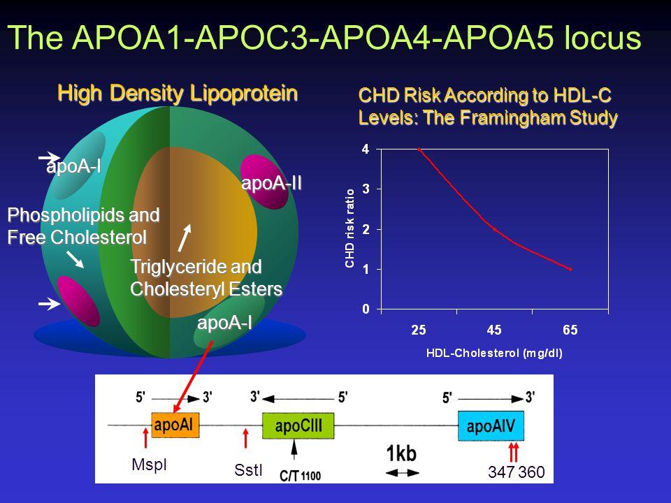 High Density Lipoprotein