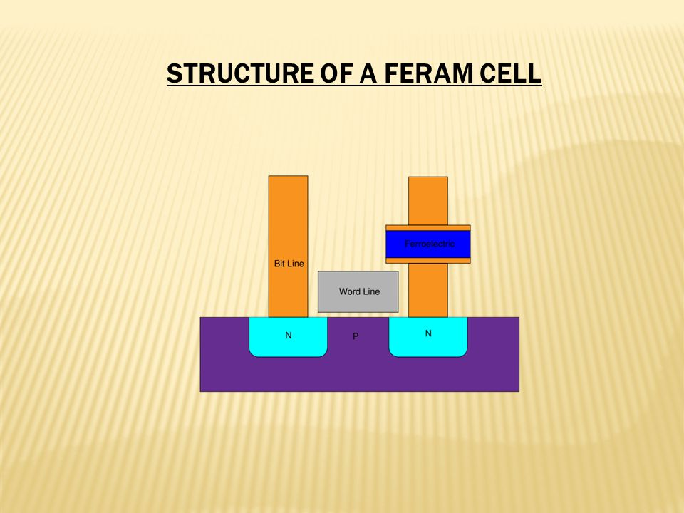 STRUCTURE OF A FERAM CELL