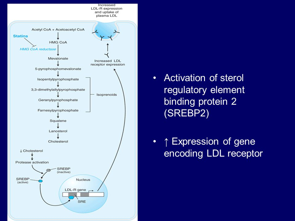 Activation of sterol regulatory element binding protein 2 (SREBP2)