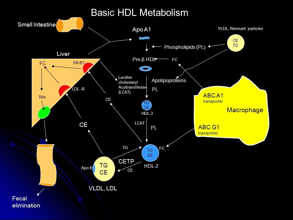 Basic HDL Metabolism Macrophage Small Intestine Apo A1 Liver ABC A1 CE