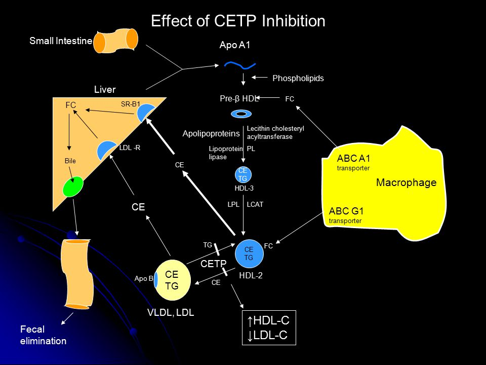 Effect of CETP Inhibition