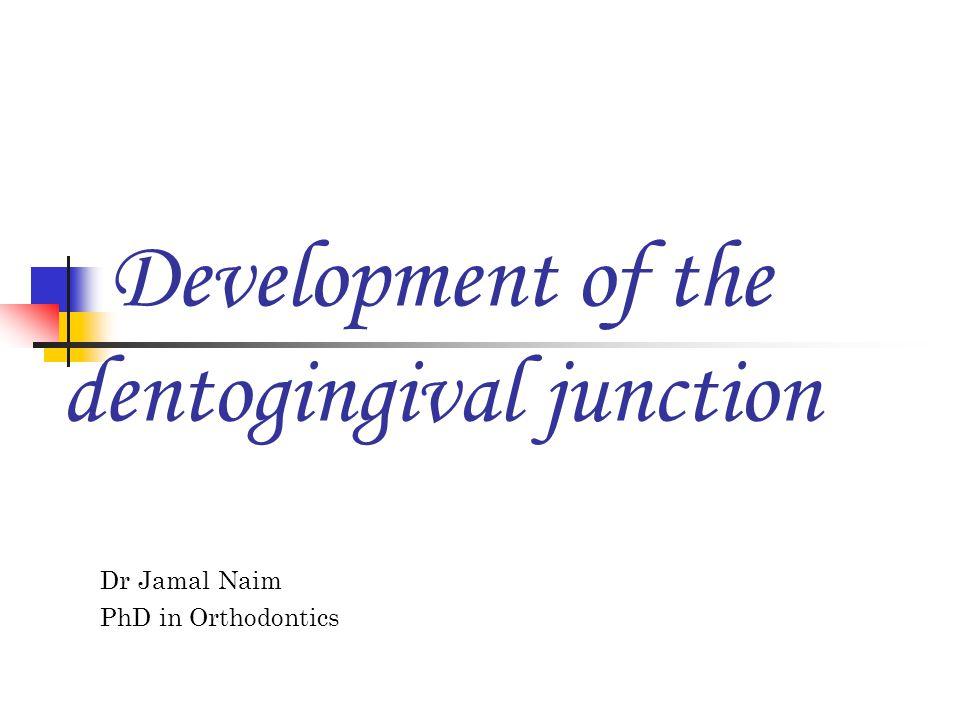 Development of the dentogingival junction