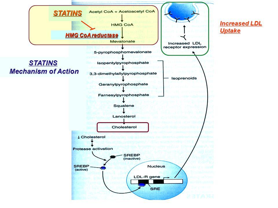 STATINS STATINS Mechanism of Action
