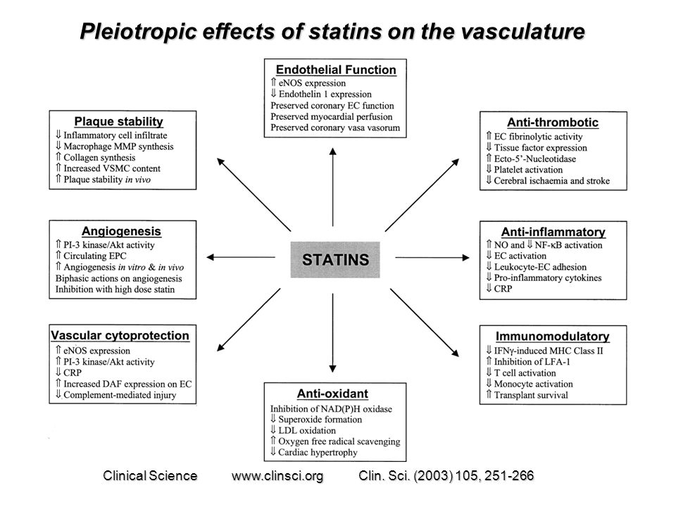 Pleiotropic effects of statins on the vasculature