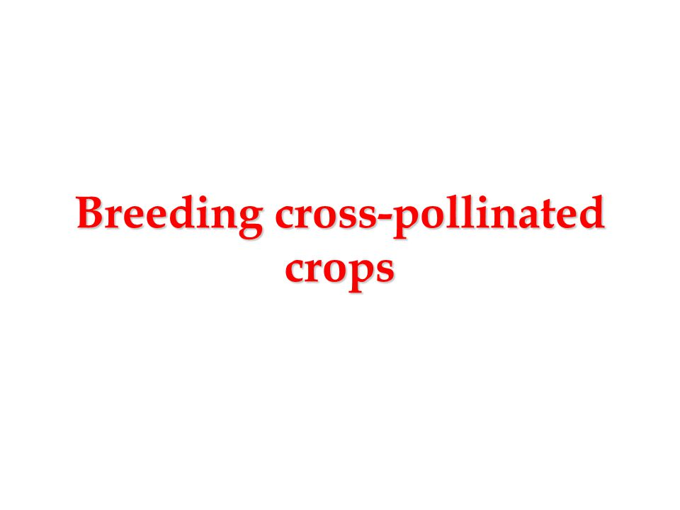 Breeding cross-pollinated crops