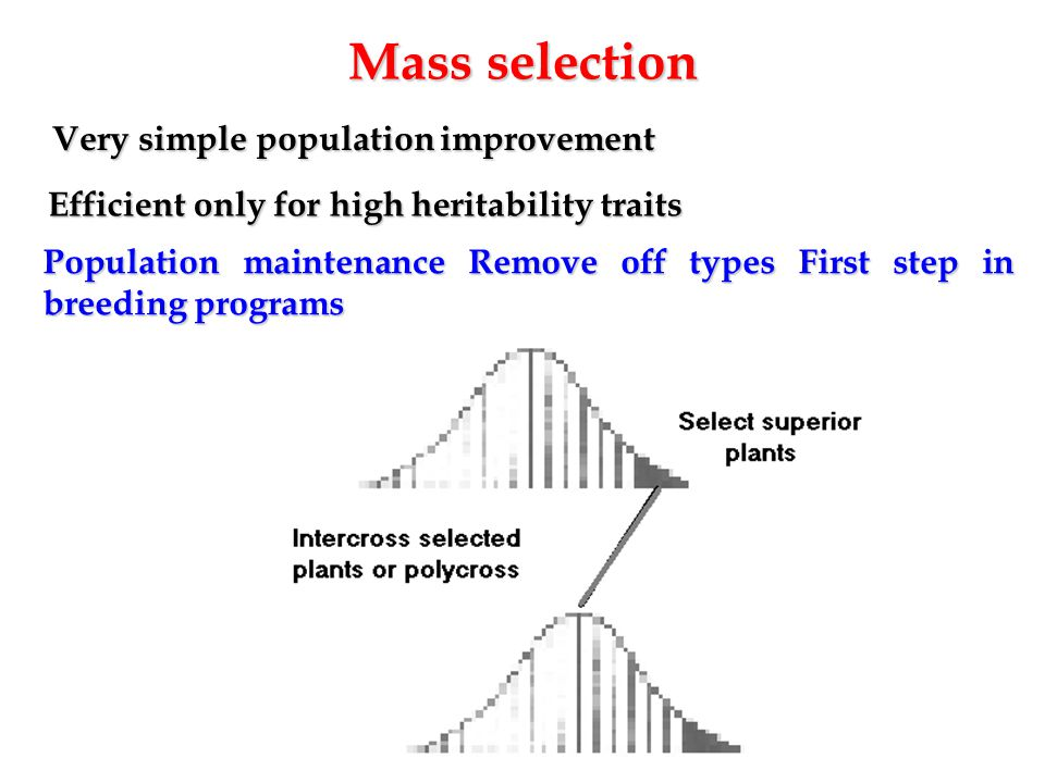Mass selection Very simple population improvement