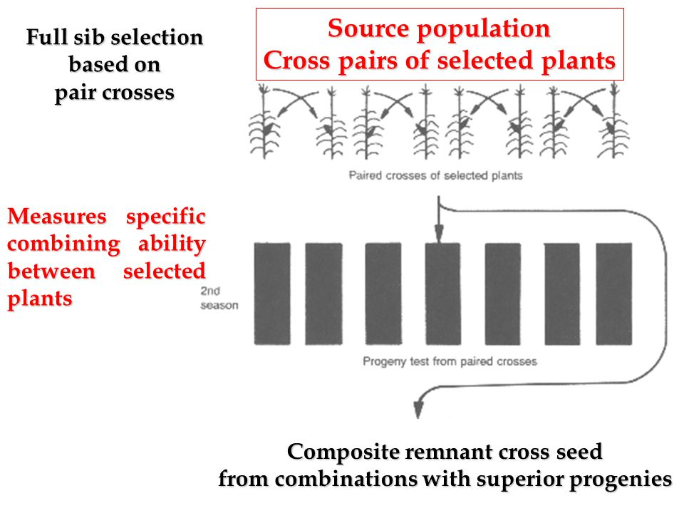 Source population Cross pairs of selected plants