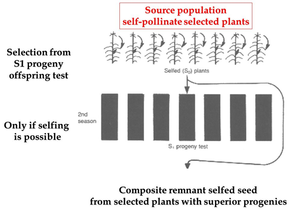 self-pollinate selected plants