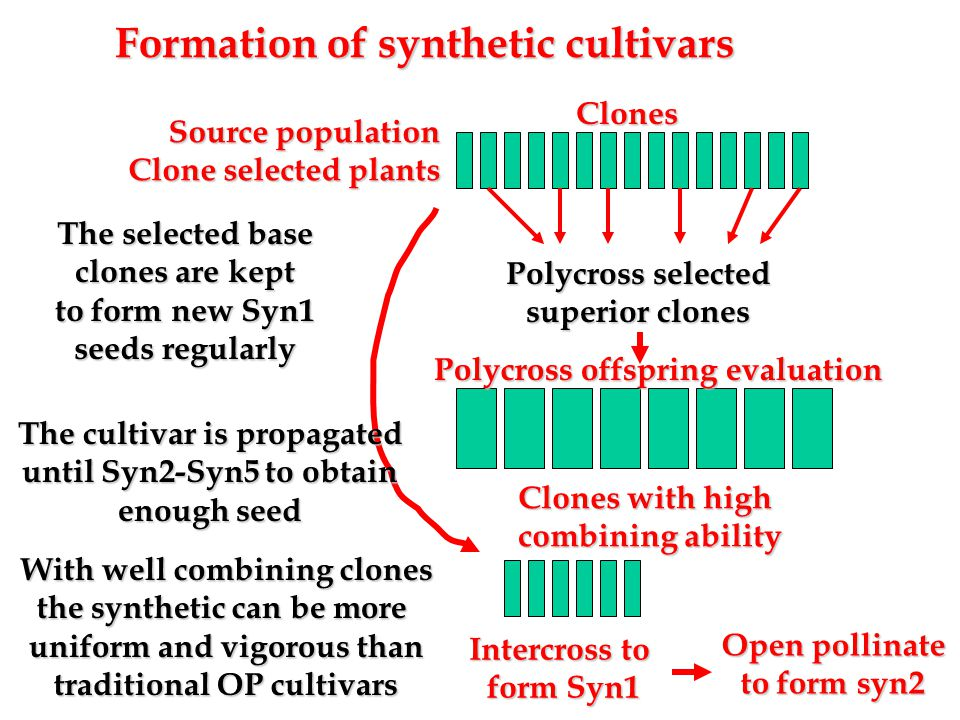 Formation of synthetic cultivars