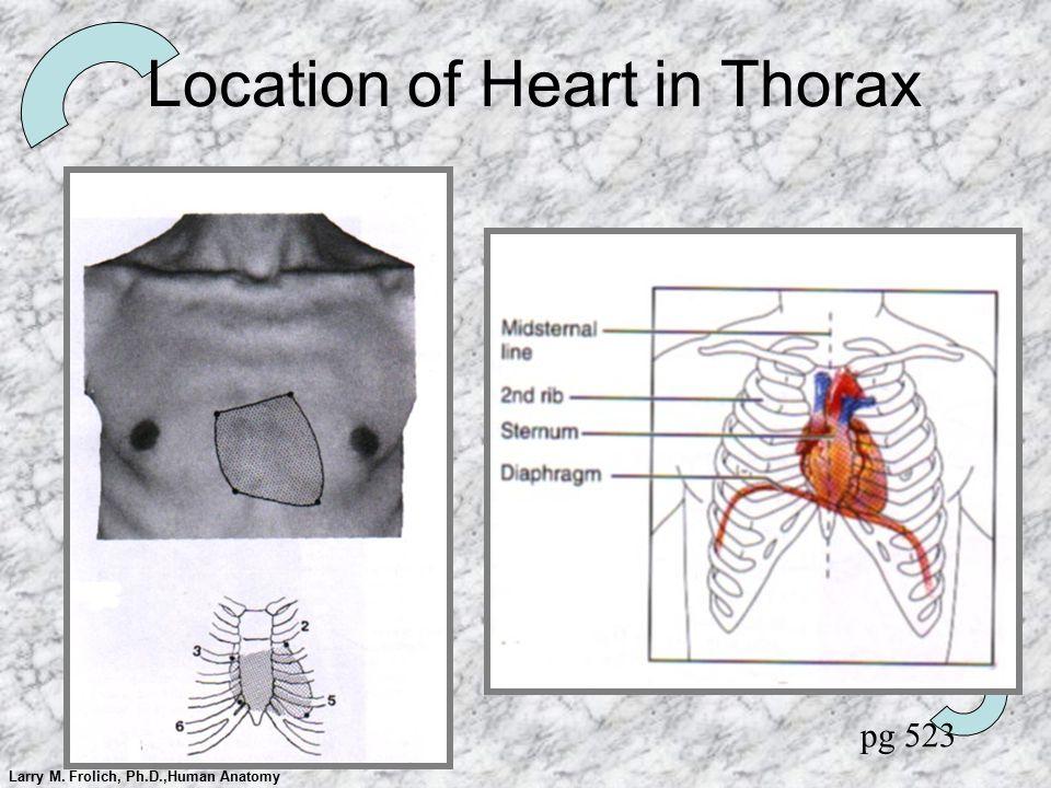 Larry M. Frolich, Ph.D.,Human Anatomy