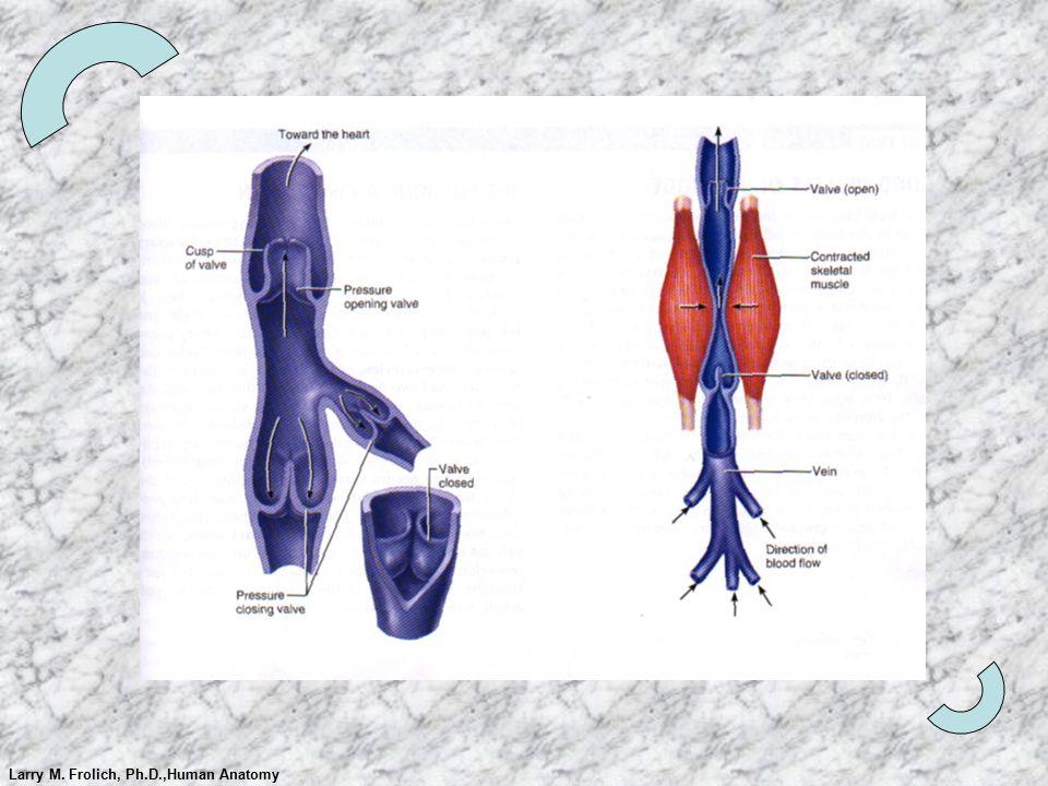 Groß Phd In Human Anatomy Fotos - Menschliche Anatomie Bilder ...