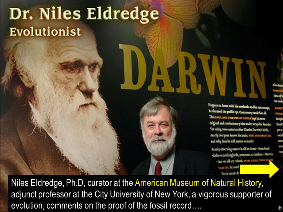 Niles Eldredge, Ph.D, curator at the American Museum of Natural History, adjunct professor at the City University of New York, a vigorous supporter of evolution, comments on the proof of the fossil record….