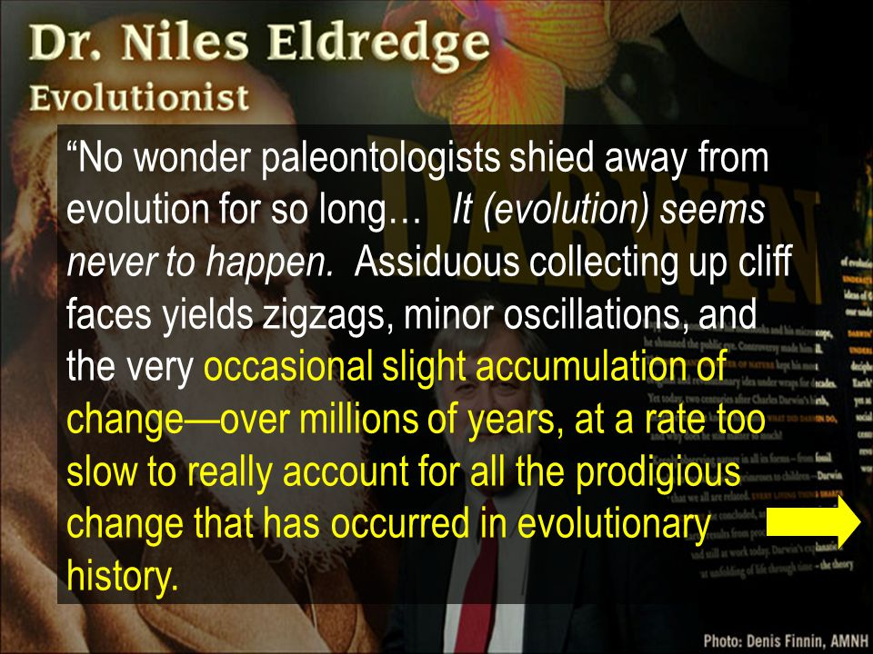 No wonder paleontologists shied away from evolution for so long… It (evolution) seems never to happen.