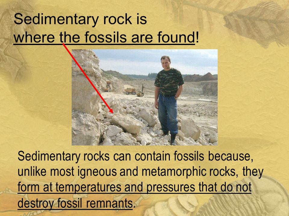 Sedimentary rock is where the fossils are found!