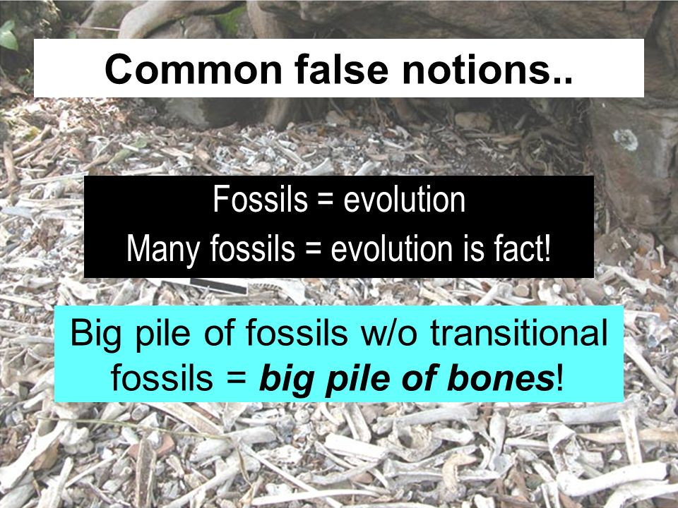 Common false notions.. Fossils = evolution