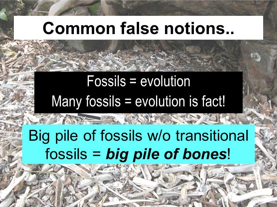 Common false notions.. Fossils = evolution