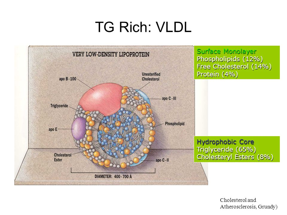 TG Rich: VLDL Surface Monolayer Phospholipids (12%)