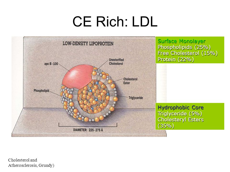 CE Rich: LDL Surface Monolayer Phospholipids (25%)
