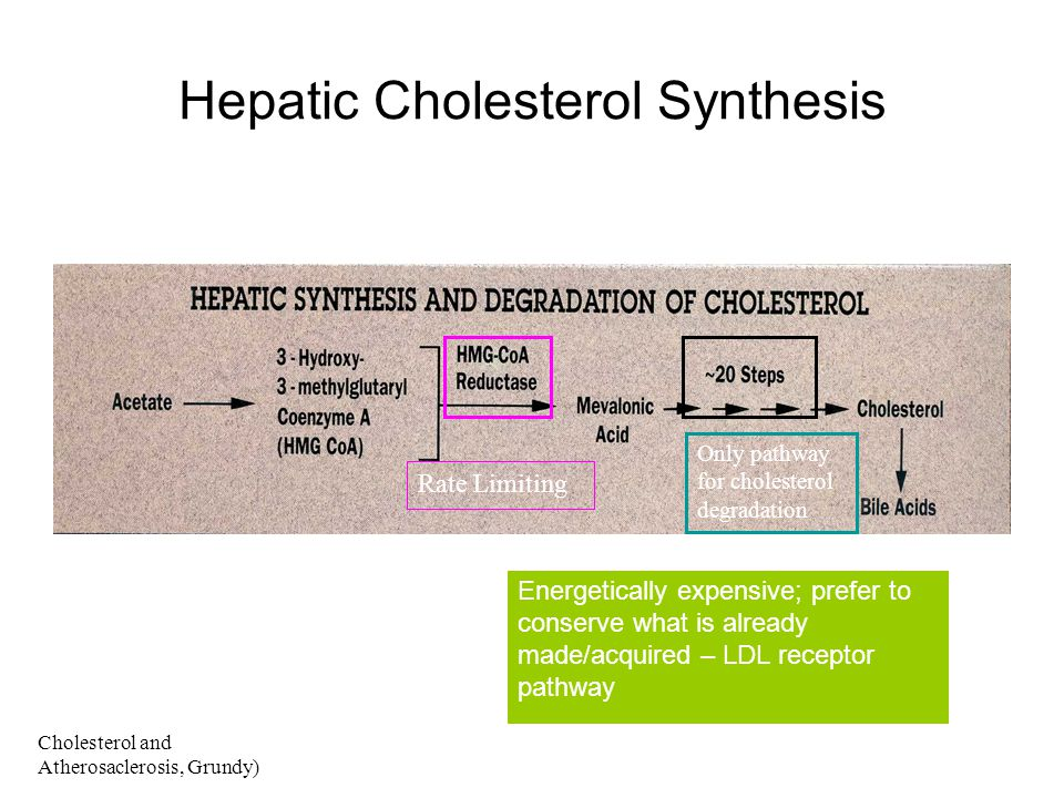 Hepatic Cholesterol Synthesis
