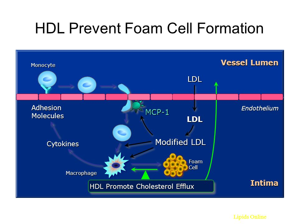 HDL Prevent Foam Cell Formation